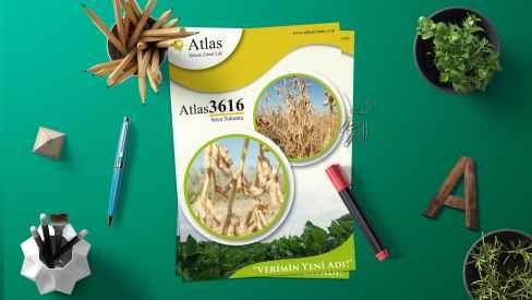 Atlas Tohum - Katalog & Broşür